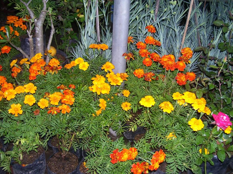 Jual Bunga Anggrek Tanaman Hias Informasi Seputar Tanaman Hias